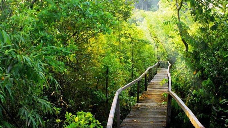 Écotourisme écologique forestier