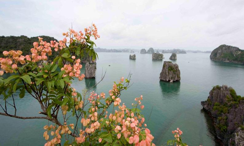 Meilleur moment pour partir à la baie d'Halong