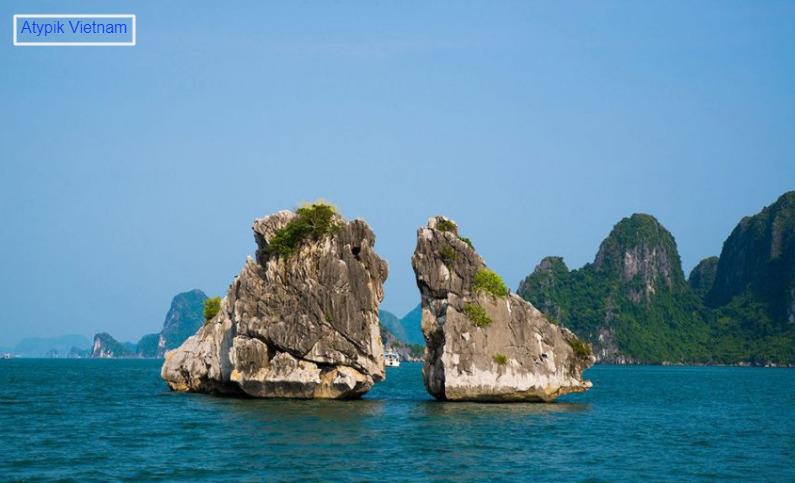 île de coq de combat