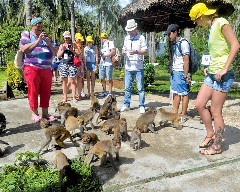 Visite de l'île des singes