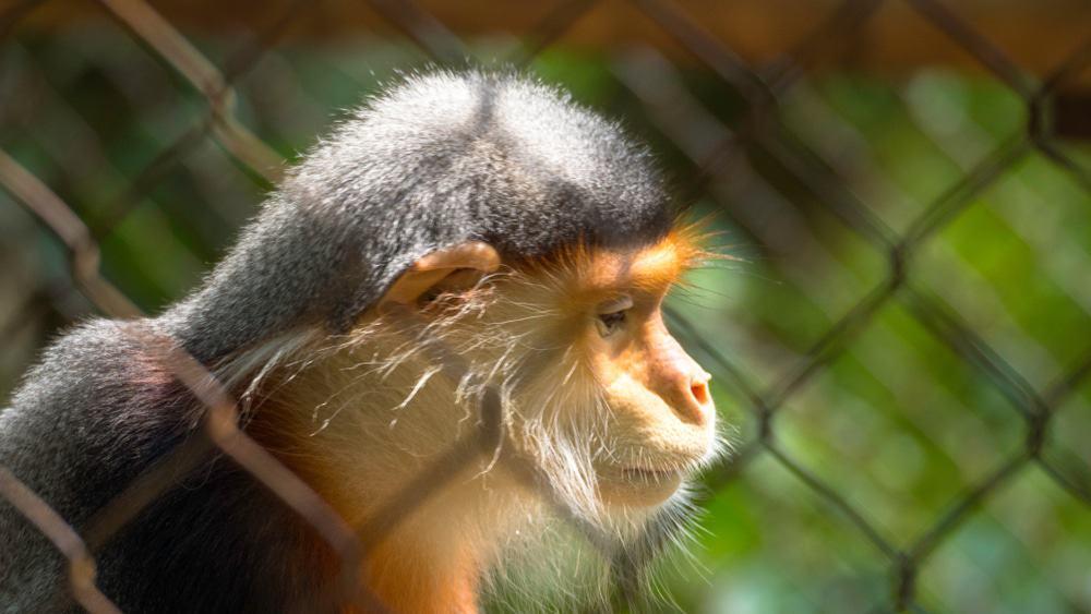 Visite du Centre de Sauvetage des Primates en voie de disparition