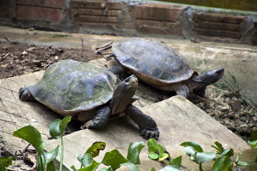 Visite du centre de conservation des tortues
