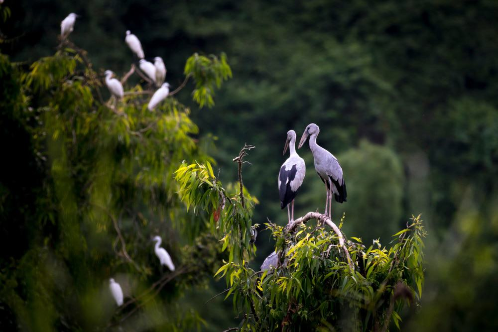 Visitez le jardin d'oiseaux de Thung Nham