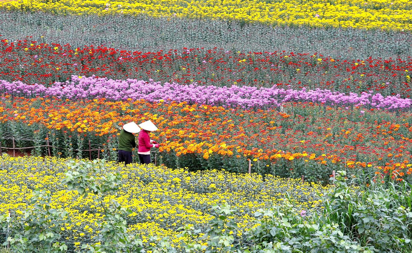 Comtempler le village de fleurs de Ba Bo Can tho