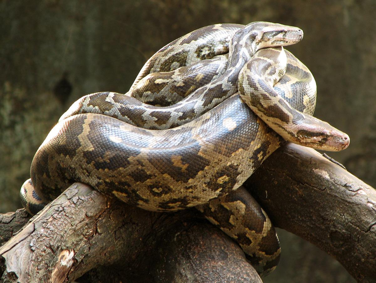 Ferme aux serpents de Dong Tam