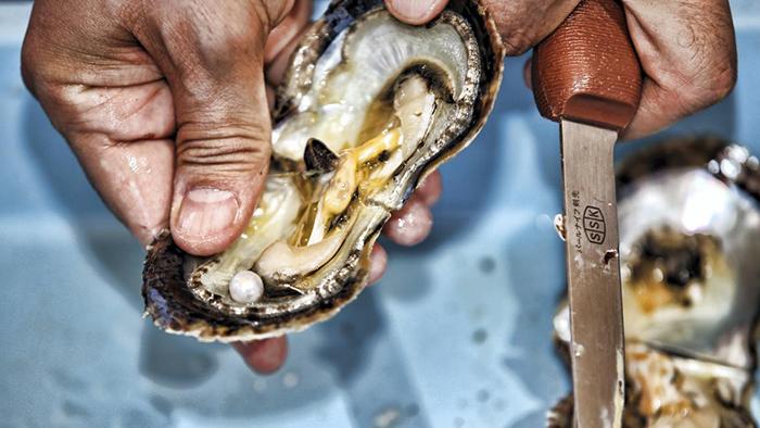 Le commerce de la perliculture à Phu Quoc