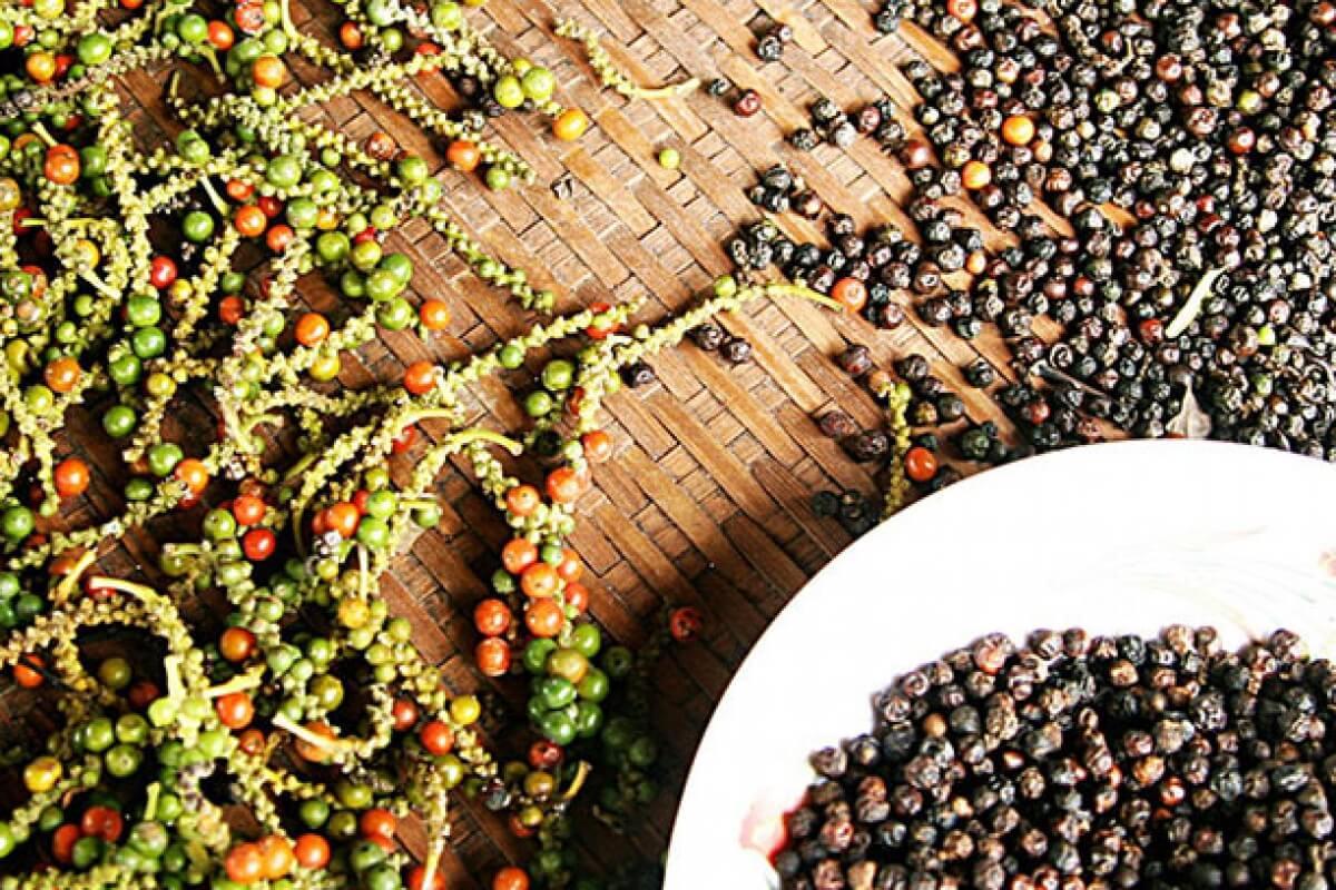 Pourquoi les plantations de poivre sont-elles spéciales