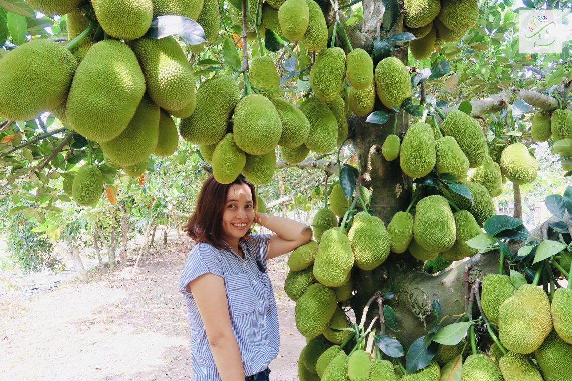 Visiter et goûter les fruits frais dans le jardin local delta du mekong