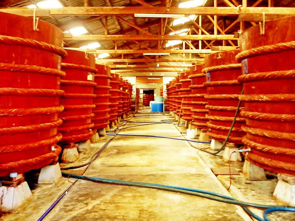 Visitez une usine de sauce de poisson