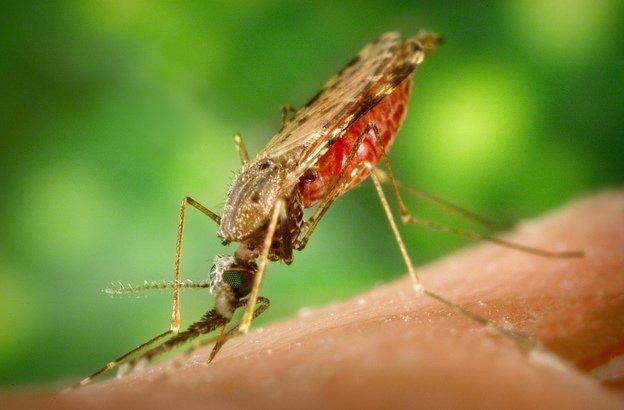 vietnam paludisme